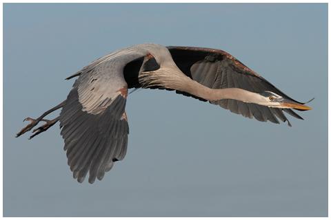 Nature Photography Birding Birdwatching Photo Galleries R Ettlinger