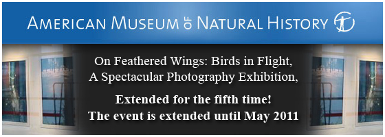 Museum of Natural History Photo Gallery